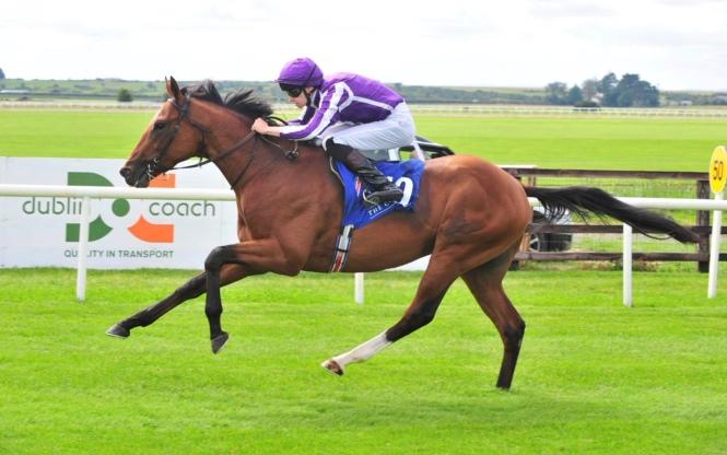 Irish Derby entry Saxon Warrior